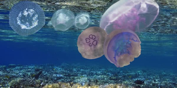 industrial amphibian drone aquatic image of a group of jellyfish floating near the surface of the water