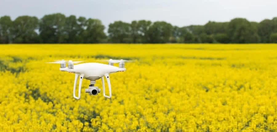 a dji phantom 4 drone flying above a yellow flowery with green trees in the background