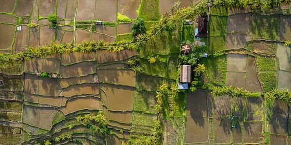 aerial view with industrial drone of rice terraces